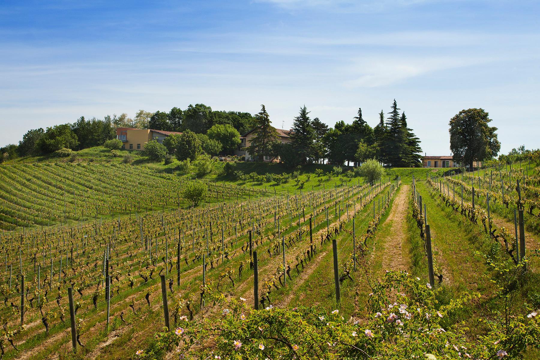 Elegant villa on top of a hill of Monferrato - 25