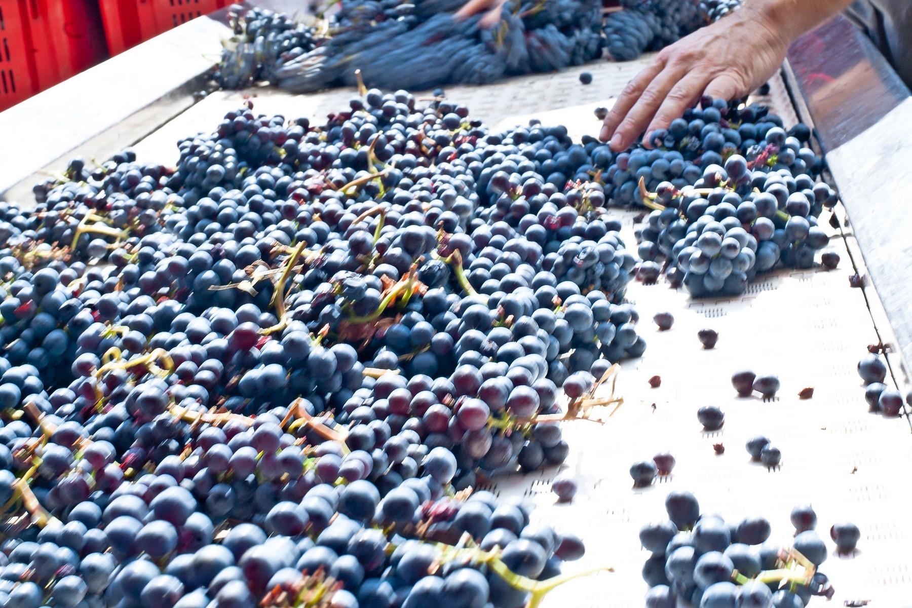 Agriturismo ed azienda agricola biodinamica nel cuore della toscana - 12