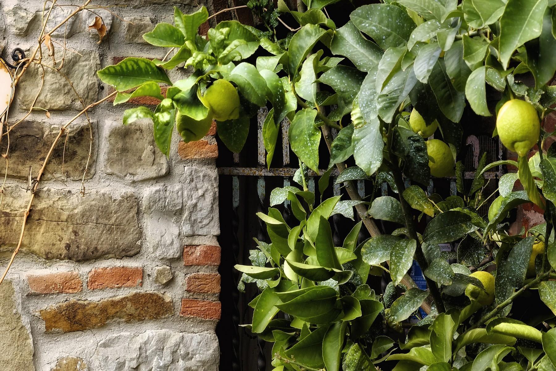 Agriturismo ed azienda agricola biodinamica nel cuore della toscana - 14