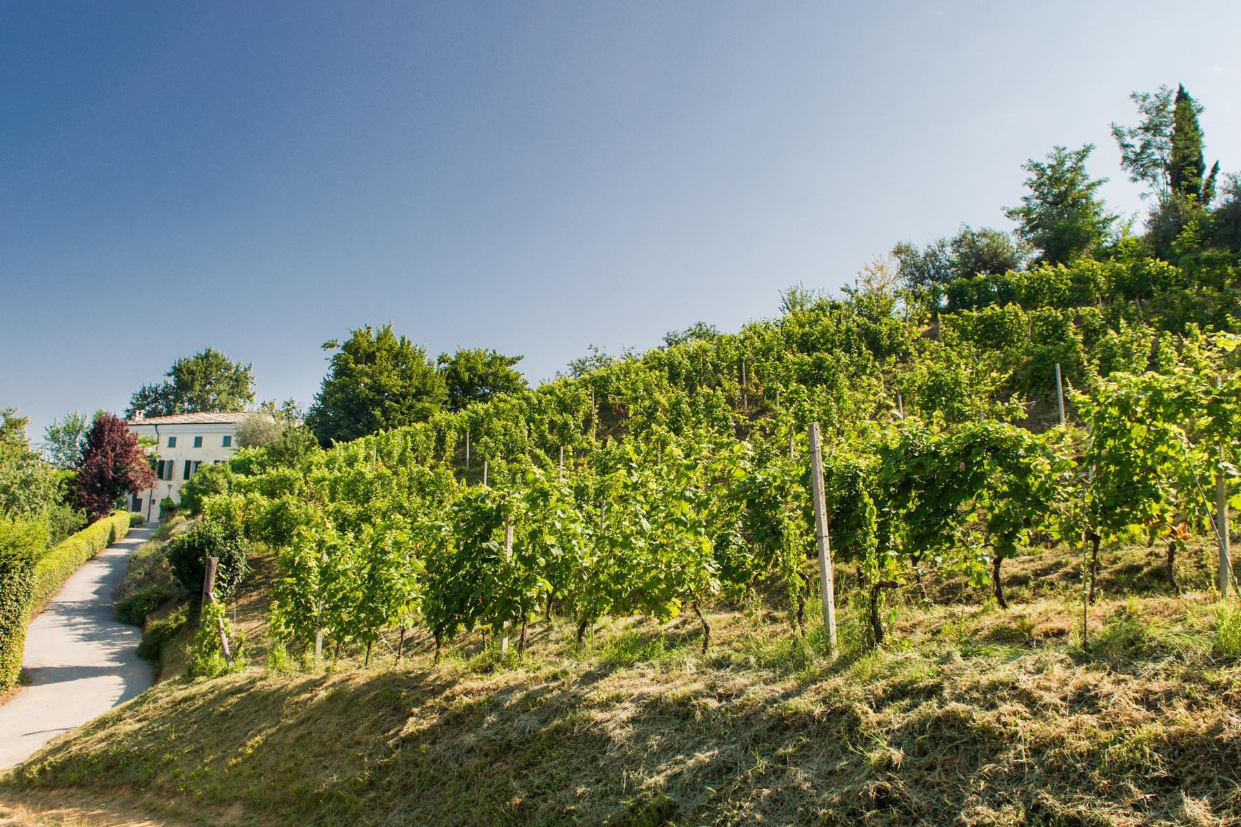 Splendid villa with winery in Piedmont - 2