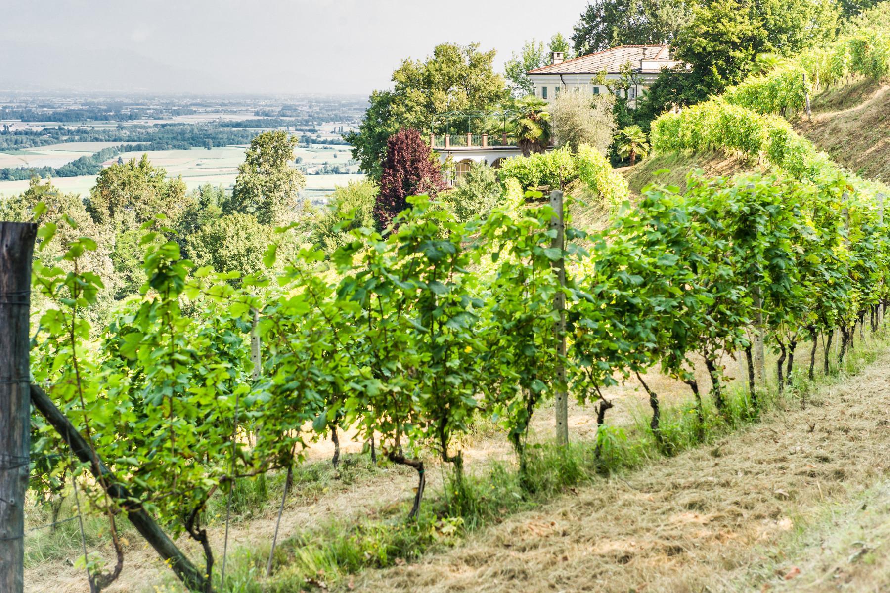Splendid villa with winery in Piedmont - 4