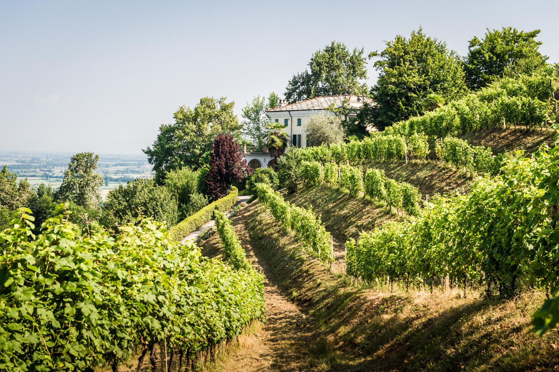 Splendid villa with winery in Piedmont - 5