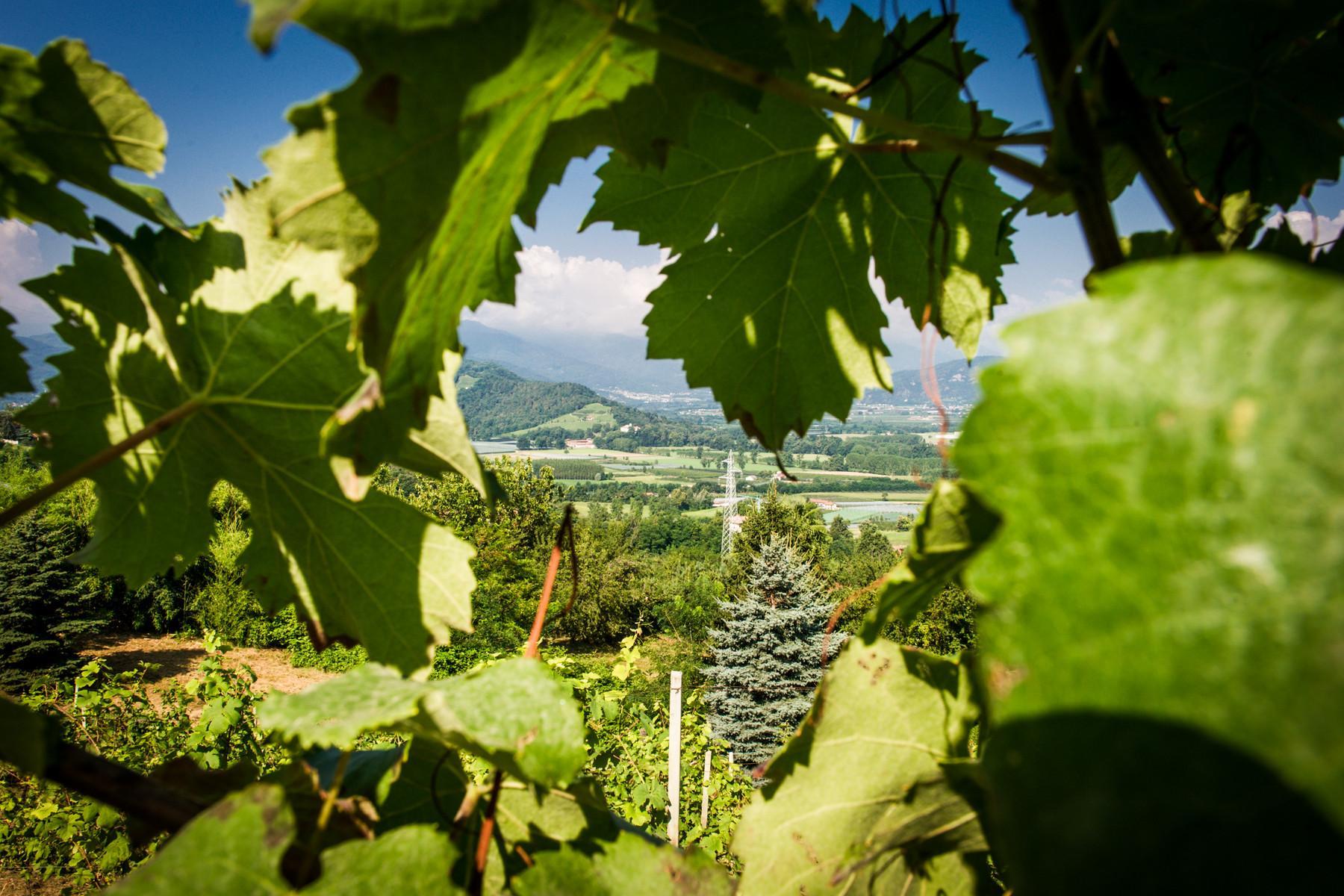 Splendid villa with winery in Piedmont - 6