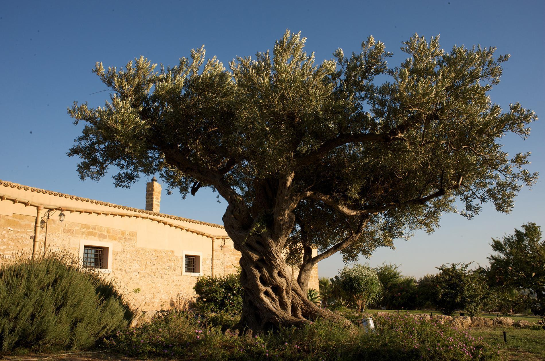 Magnifica azienda vinicola Siciliana - 12
