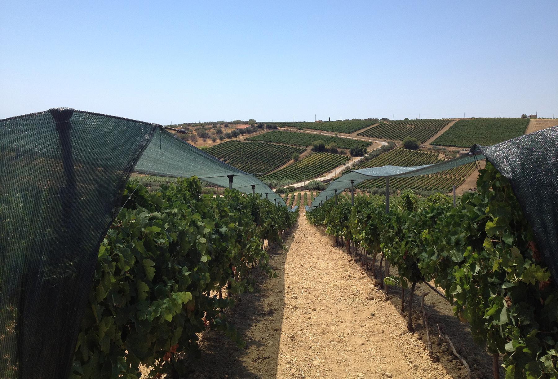 Herrliches Weingut in Sizilien - 15