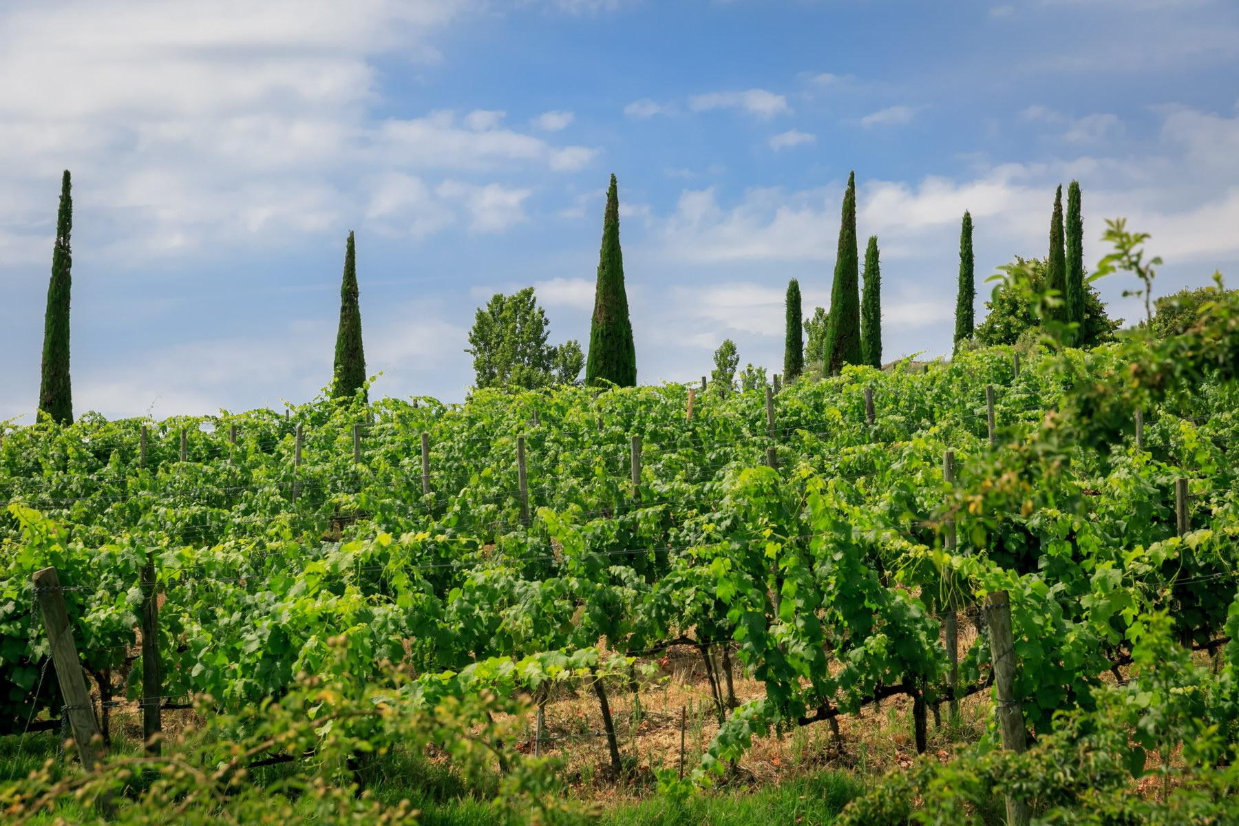 Wonderful wine estate with spectacular views of Montepulciano - 2