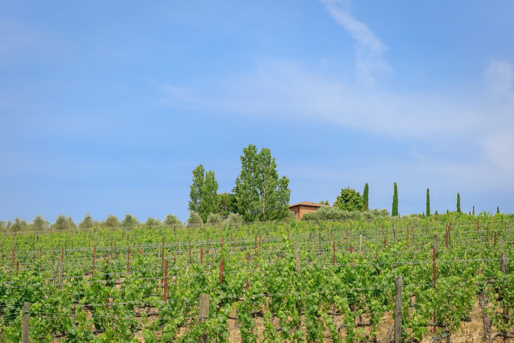 Wonderful wine estate with spectacular views of Montepulciano - 7