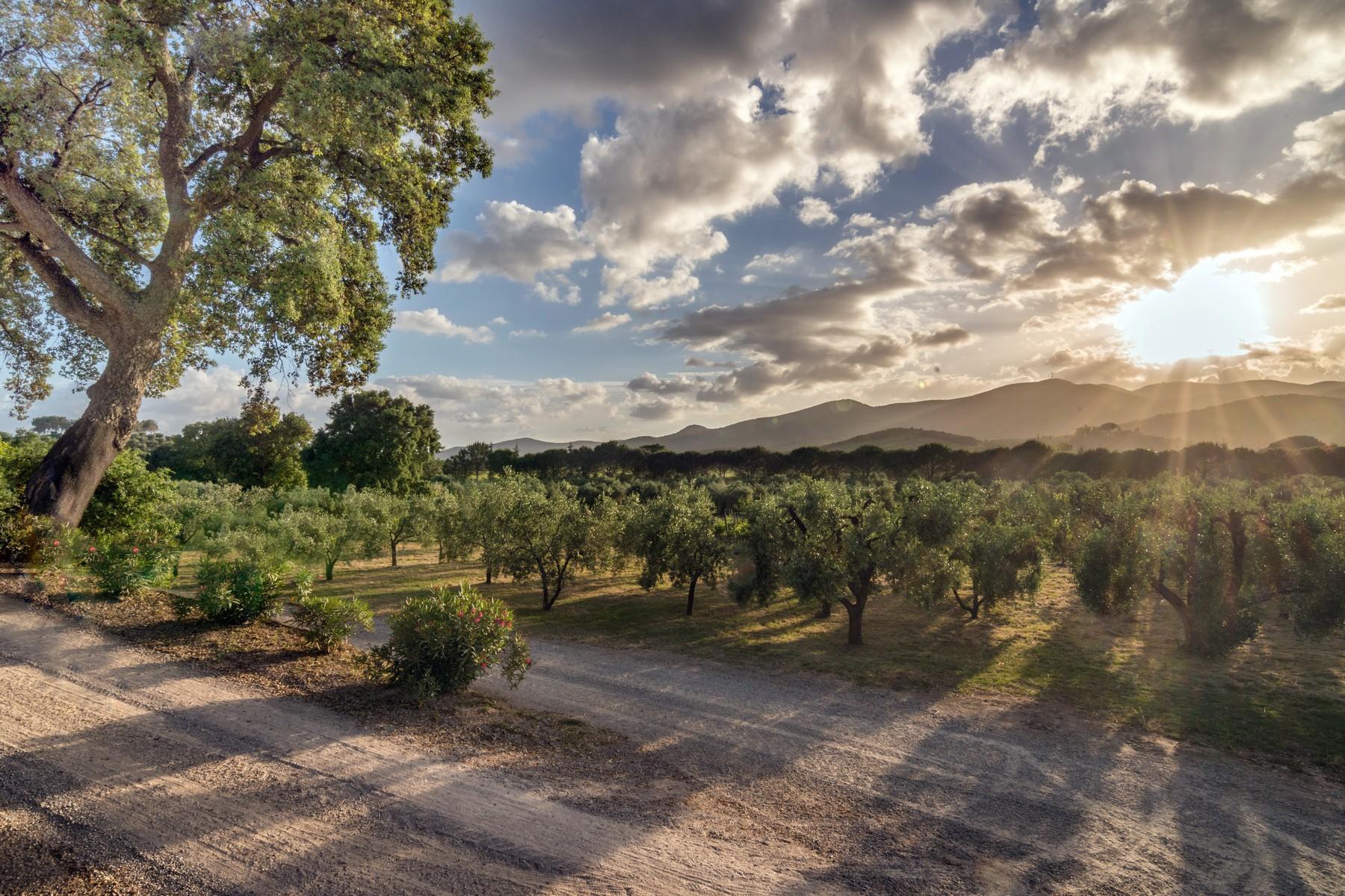 Inspiring tuscan estate with vineyards - 27