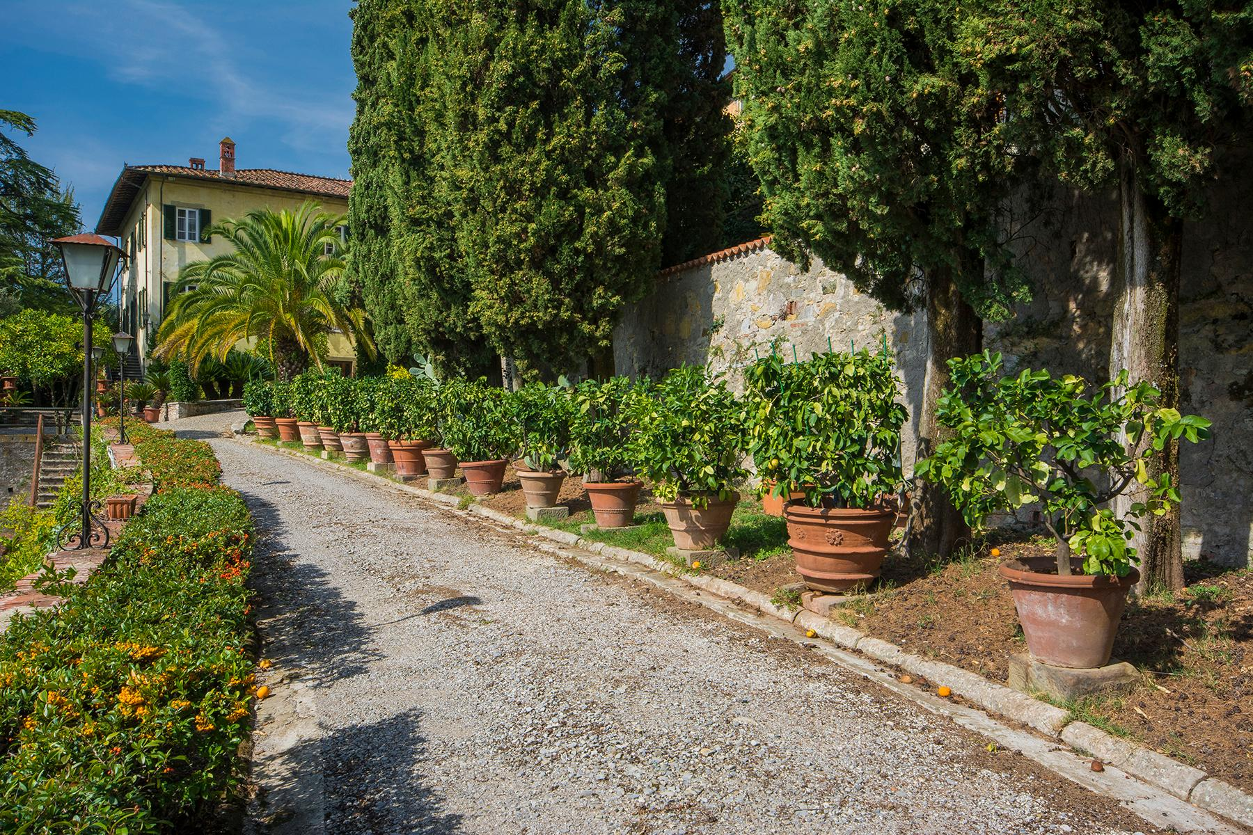 17th century villa with olive groves and vineyards - 2