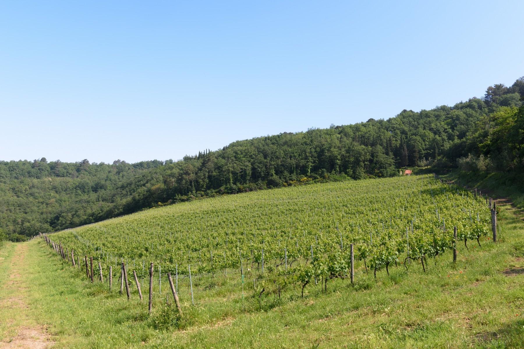 Important wine estate in Chianti - 35