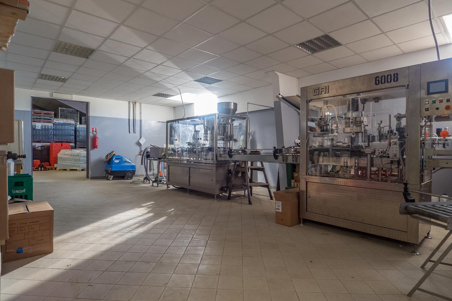 Meravigliosa azienda vitivinicola nel cuore del Monferrato - 9