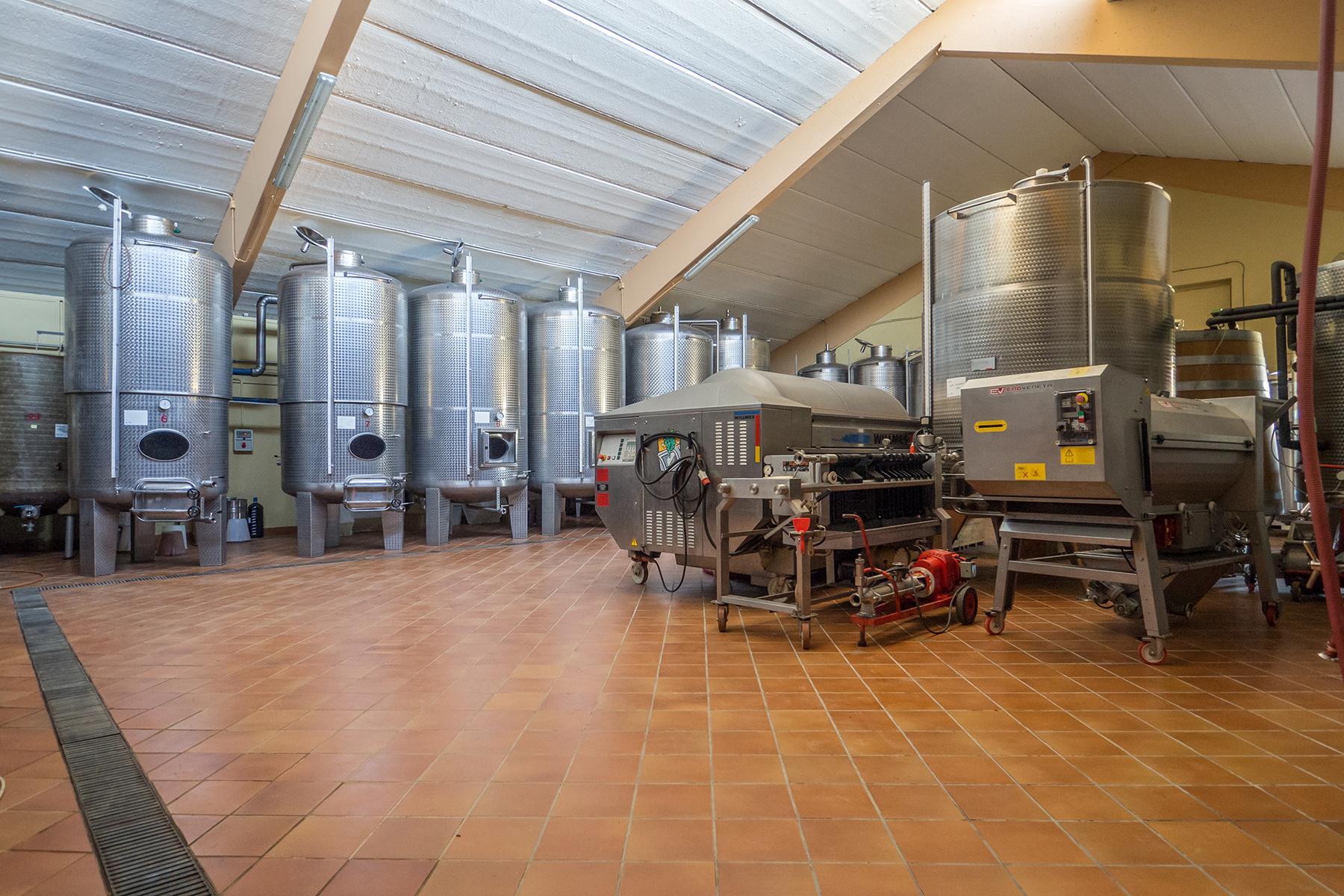 Meravigliosa azienda vitivinicola nel cuore del Monferrato - 10