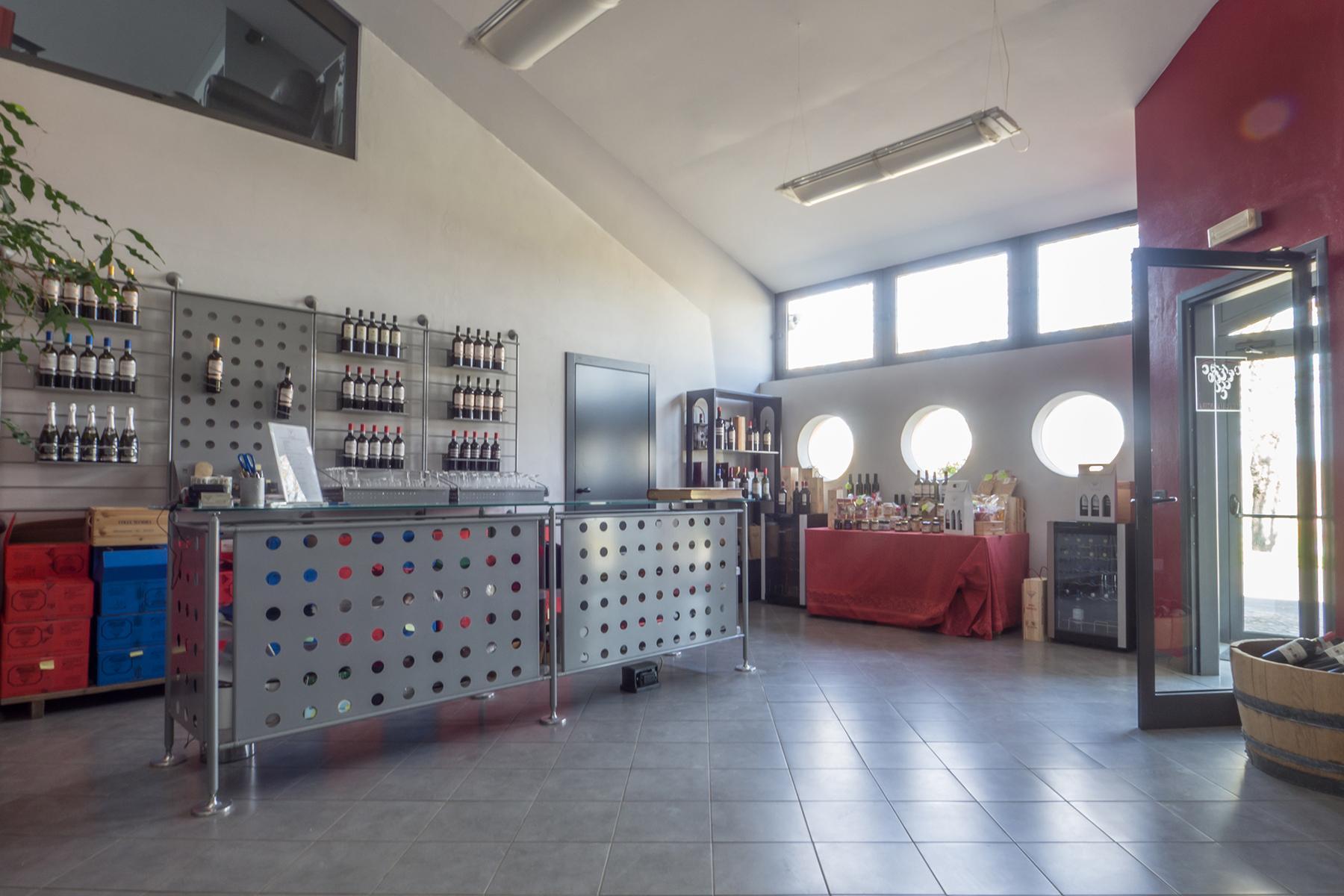 Meravigliosa azienda vitivinicola nel cuore del Monferrato - 11