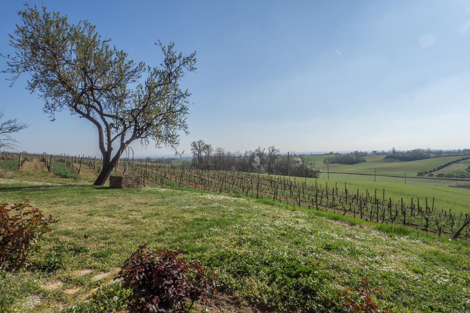Meravigliosa azienda vitivinicola nel cuore del Monferrato - 16