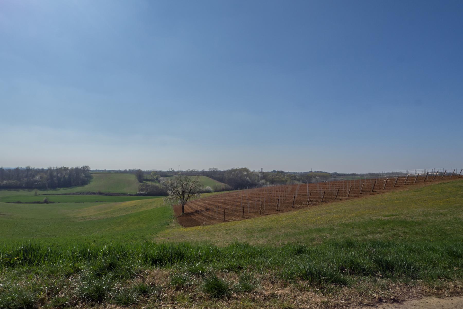 Meravigliosa azienda vitivinicola nel cuore del Monferrato - 31