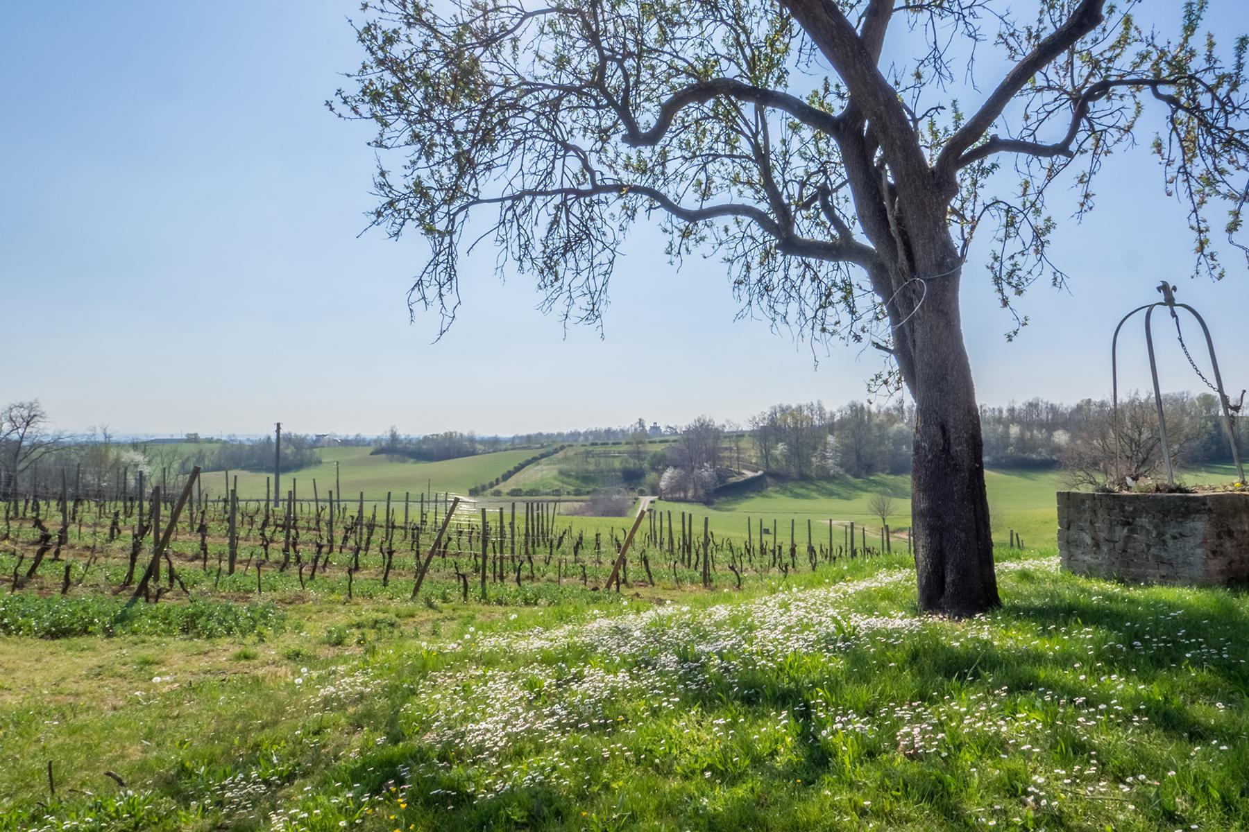 Meravigliosa azienda vitivinicola nel cuore del Monferrato - 13