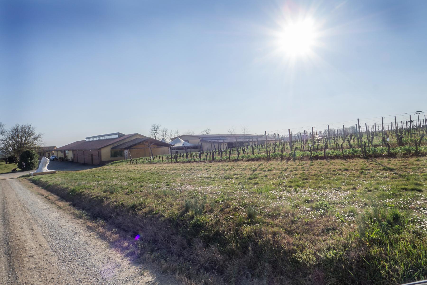 Meravigliosa azienda vitivinicola nel cuore del Monferrato - 14