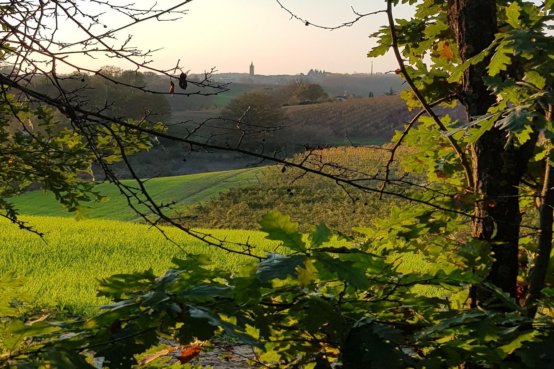 Meravigliosa azienda vitivinicola nel cuore del Monferrato - 15