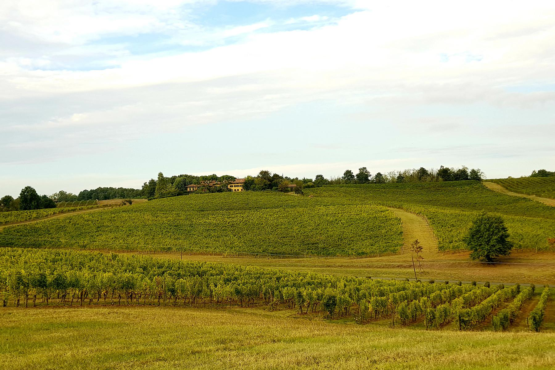 Magnificent wine producing estate in the heart of Monferrato region - 4
