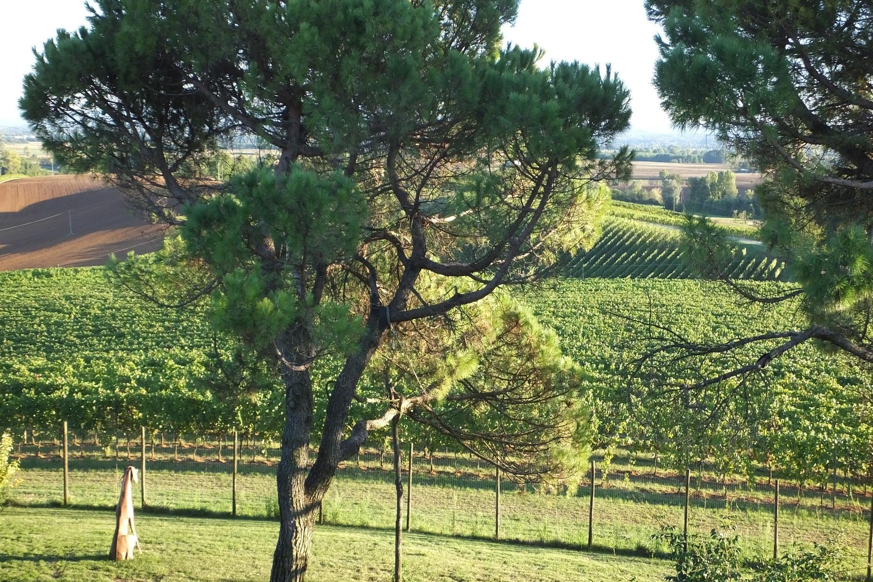 Magnificent wine producing estate in the heart of Monferrato region - 5