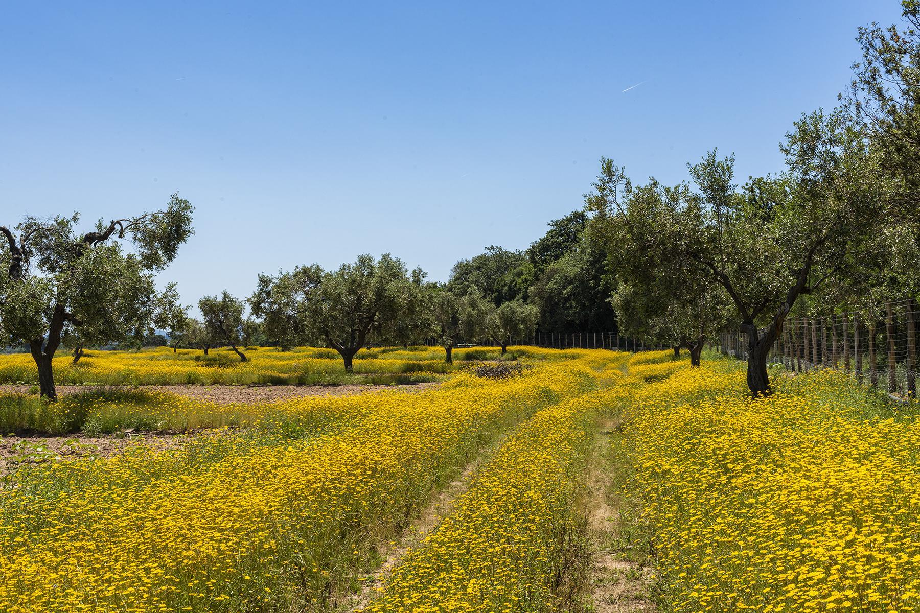 Extraordinary estate in the heart of Maremma - 13