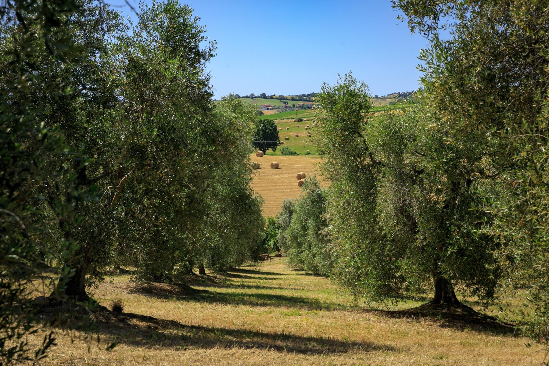 Wonderful villa with farm-house in Maremma - 25