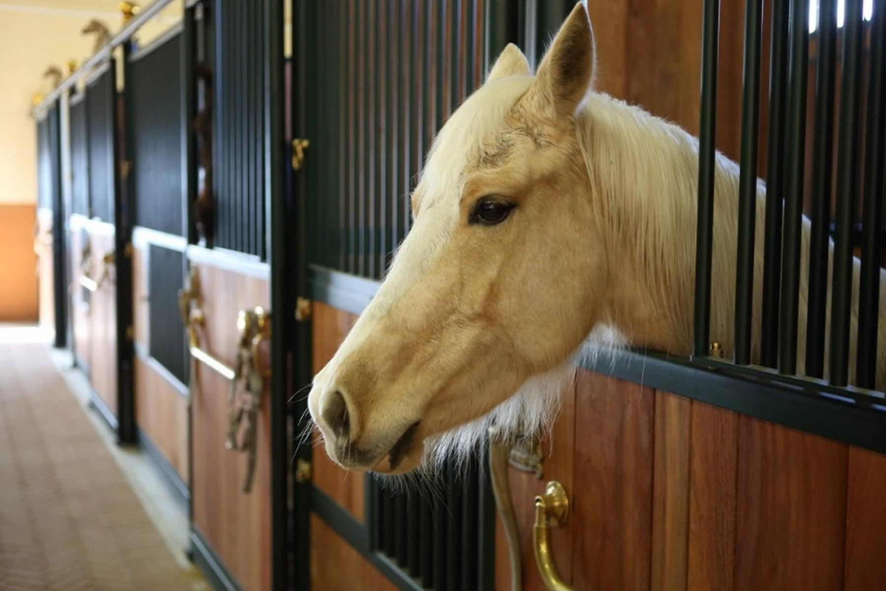 Equestrian facility/boutique hotel Val d'Orcia - 33