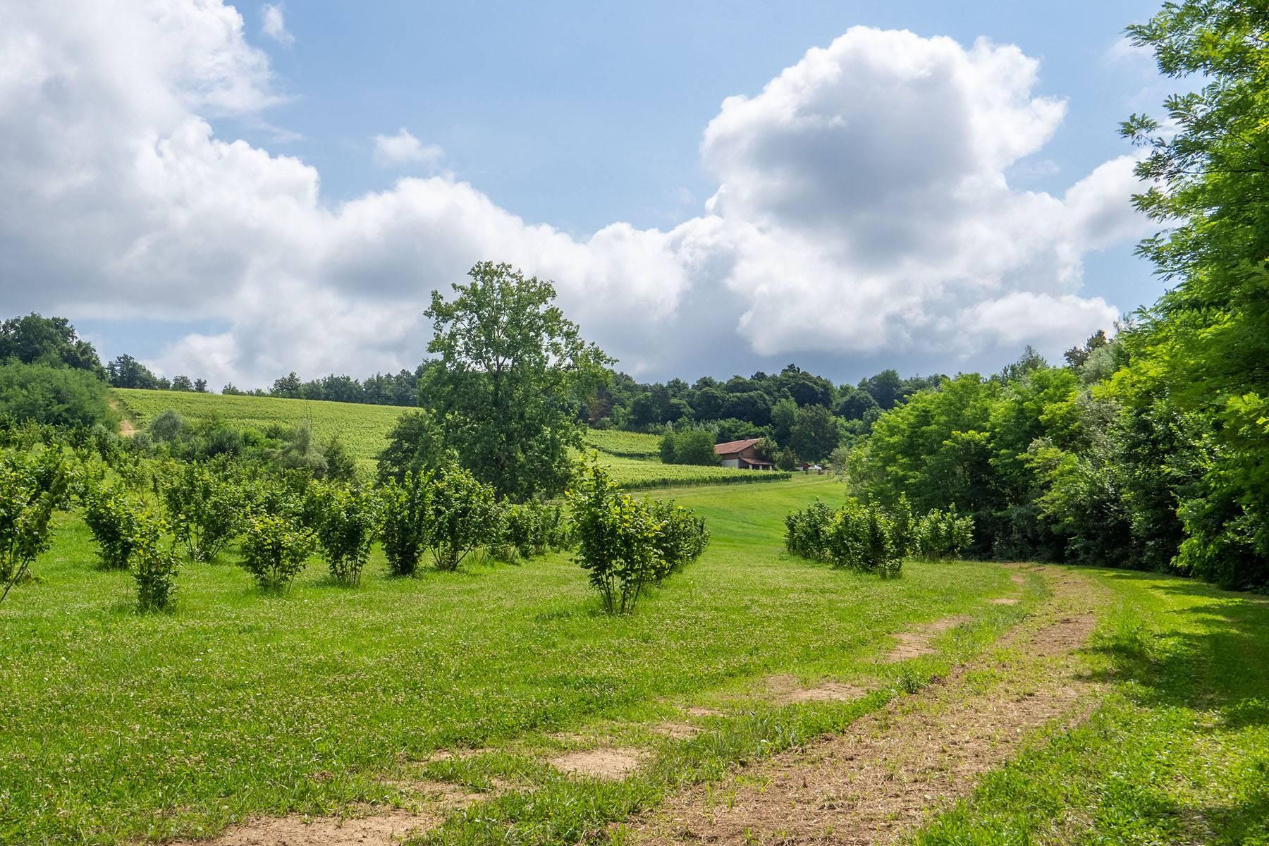 Domaine viticole dans la région du Roero - 16