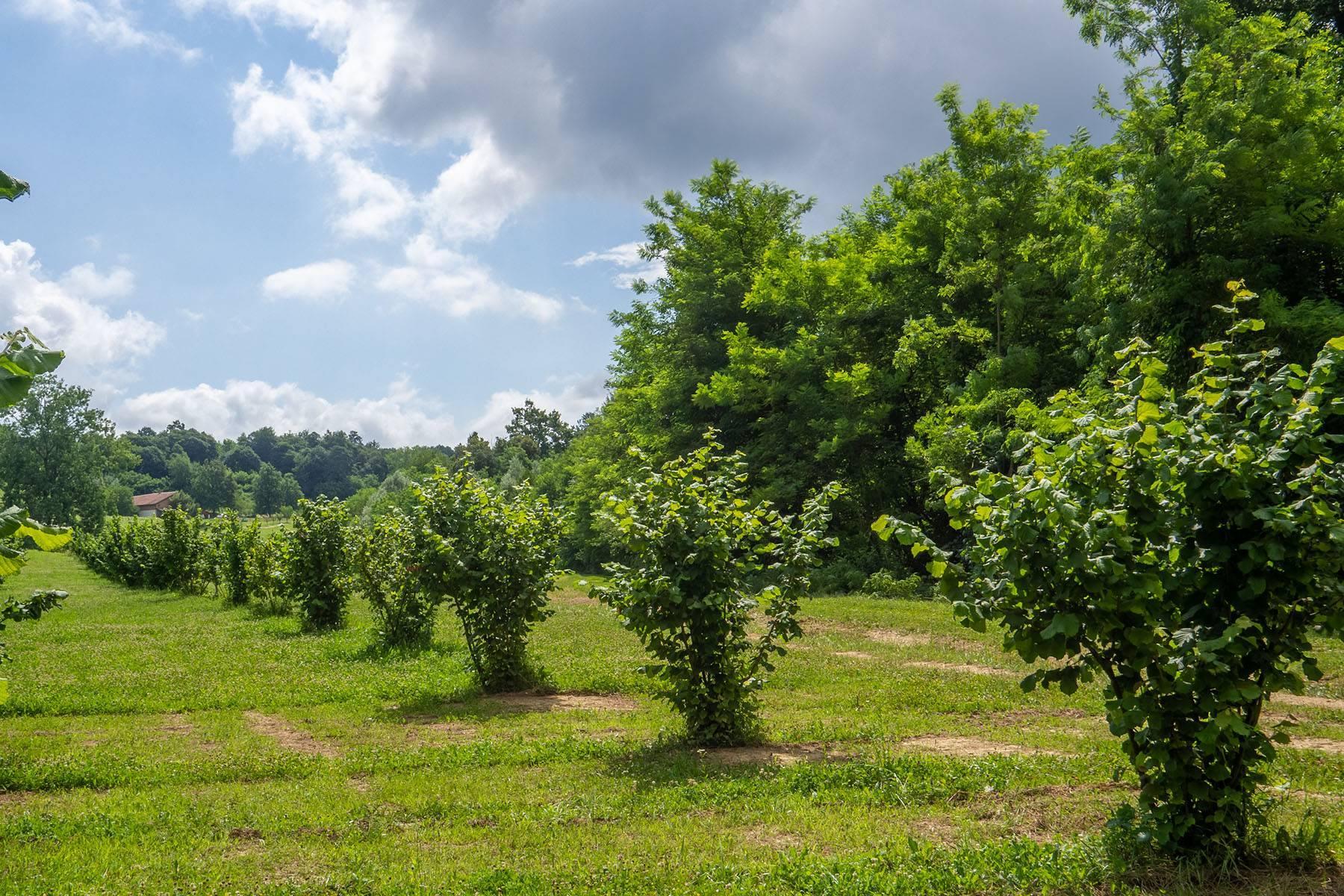 Domaine viticole dans la région du Roero - 8