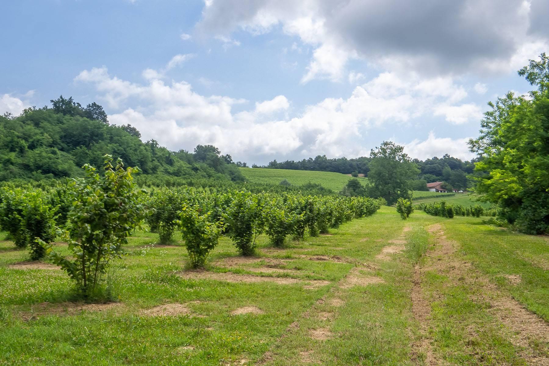 Domaine viticole dans la région du Roero - 18