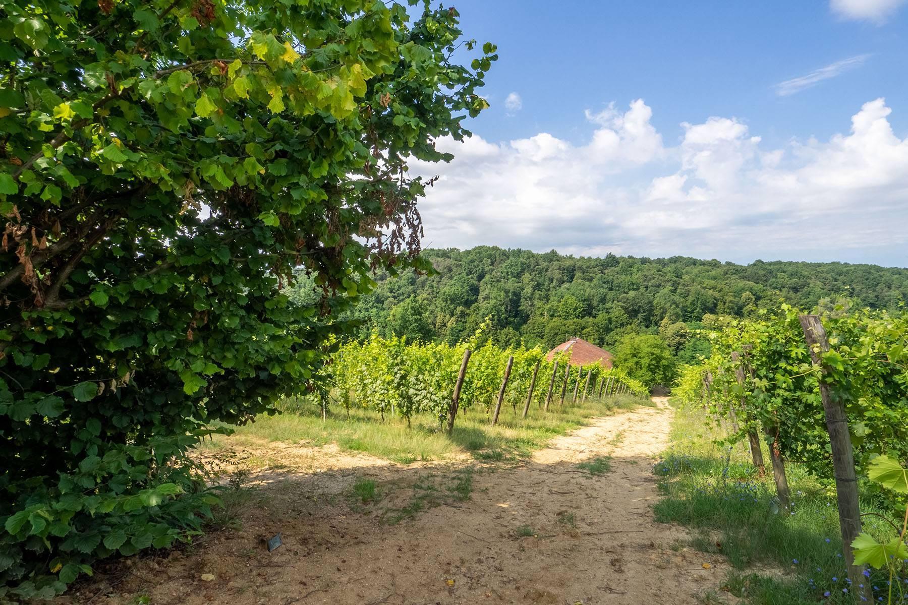 Domaine viticole dans la région du Roero - 7