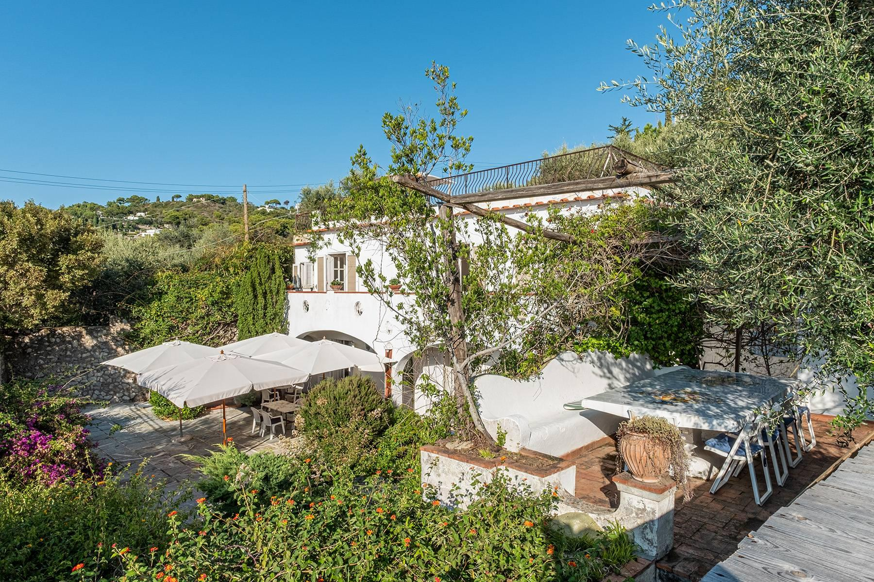 Charming villa with olive grove and swimming pool overlooking the sea - 3