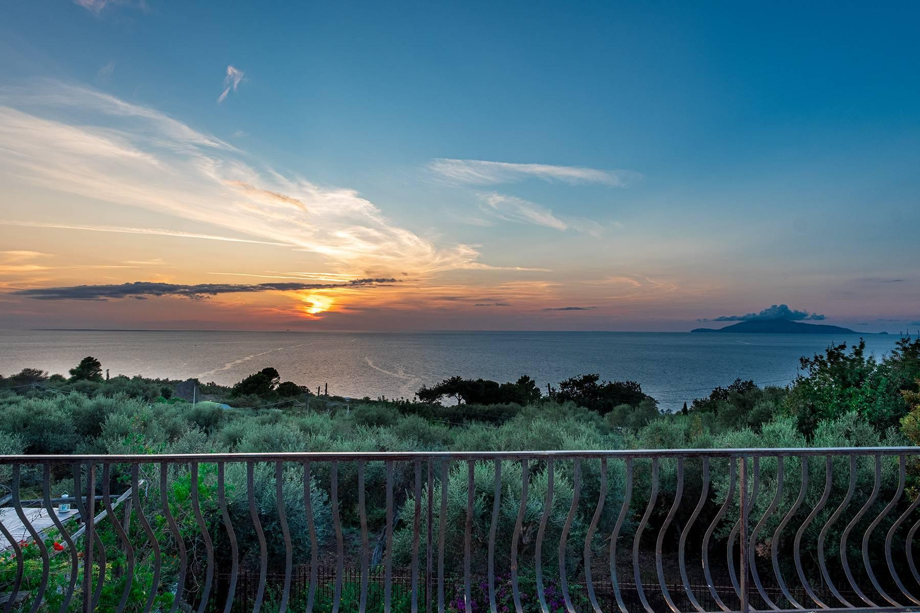 Charming villa with olive grove and swimming pool overlooking the sea - 25