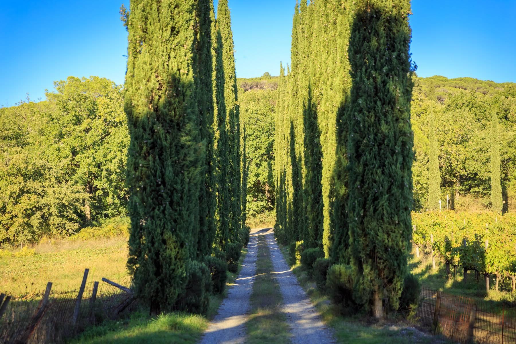 Villa historique dans la campagne toscane - 36