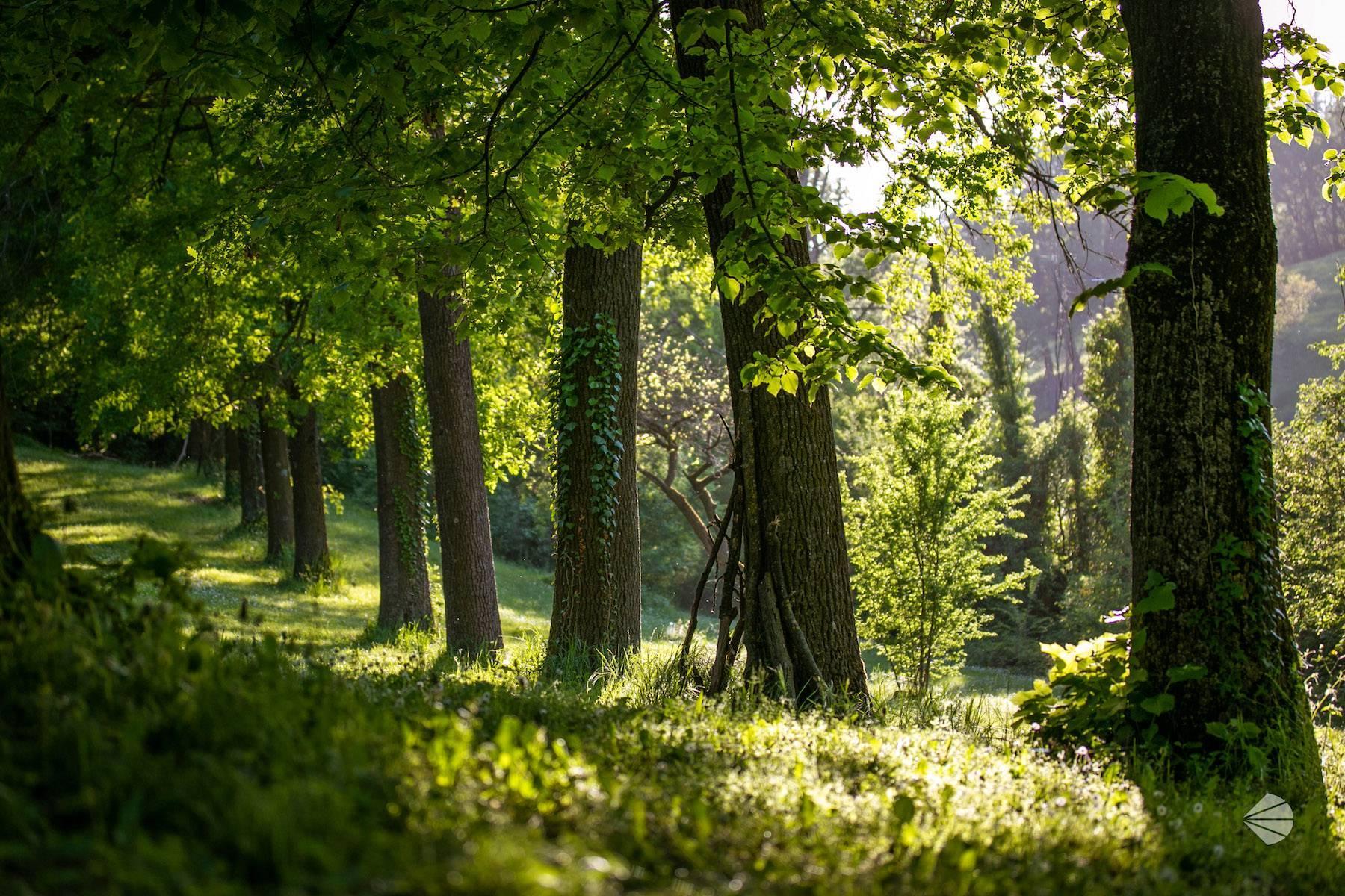 Dimora d'Epoca sulle prime colline dell'Appennino Modenese - 12