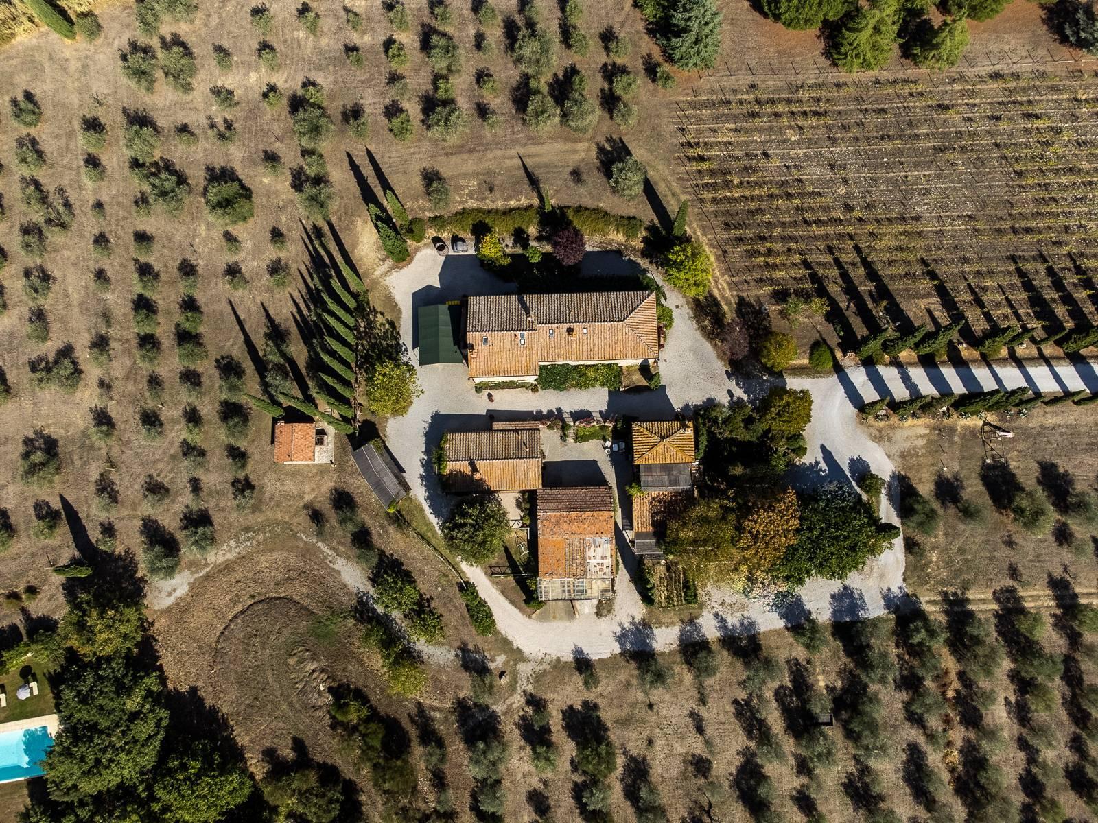 Organic winery in the heart of Crete Senesi - 1
